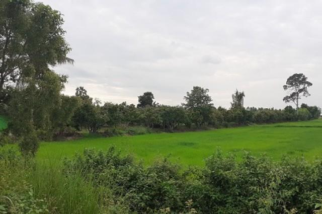 ขายที่ดิน สวนมะม่วง เนื้อที่ 21 ไร่ ขาย ไร่ละ 150,000 บาท วังทอง พิษณุโลก