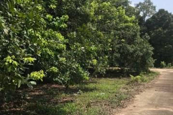 ขายสวนเงาะ ขนาด 4 ไร่ 89 ตารางวา ห่างจากตลาดหรือถนนสุขุมวิท 4 โล ขลุง จันทบุรี