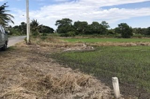 ขายด่วน ที่ดินแปลงใหญ่ สวยมาก 50ไร่29วา ราคาถูก หนองจอก